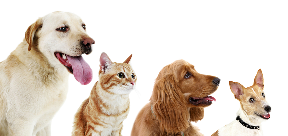 Joannes dog grooming why choose joannes dog cat grooming salon solutioingenieria Images